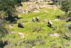 Granja de Torrehermosa - Ganaderia y Agricultura